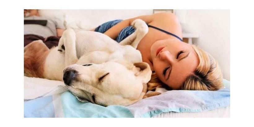 Devemos dormir com o nosso animal de companhia? Conheça a resposta neste artigo.